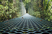 La Paz Prints - Footbridge in Costa Rican Forest Print by Jeremy Woodhouse