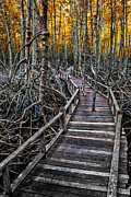 Golden Digital Art Prints - Footpath in mangrove forest Print by Adrian Evans