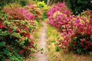 Peaceful Walking Path Framed Prints - Footpath with azaleas Framed Print by Gaspar Avila