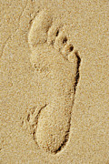 Getting Away Prints - Footprint in sand on beach Print by Sami Sarkis