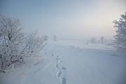 Footprint In Snow Print by Elin Enger