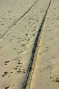 Sami Sarkis - Footprints and tyre tracks in the sand