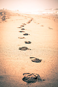 Footprints Photo Framed Prints - Footprints in Sand Framed Print by Paul Velgos