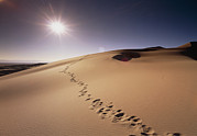 Sand Dunes Posters - Footprints Over Sand Dunes Poster by Jeremy Walker