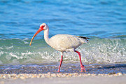 Wild Life Prints - For the Birds Print by Betsy A Cutler East Coast Barrier Islands