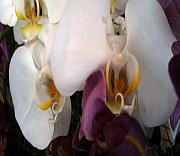 Observer Prints - For the Love of Orchids Print by Fania Simon