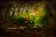 Autumn Landscape Digital Art - Forbidden Woods by Svetlana Sewell