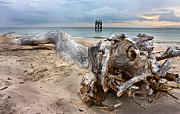 Tree Roots Photos - Forecast by Betsy A Cutler East Coast Barrier Islands