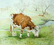 Cow Drawings Framed Prints - Foremans Favorite Framed Print by Jill Iversen