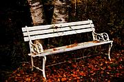 Autumn Colours Photos - Foresaken Seat by Wenata Babkowski
