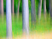 Sweating Photo Prints - Forest abstract Print by Odon Czintos