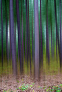Centre Digital Art Prints - Forest Abstract02 Print by Svetlana Sewell