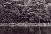 Jordan Photo Originals - Forest At Jordan Pond Acadia BW by Steve Gadomski