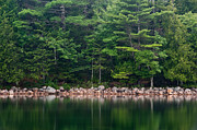 Jordan Photo Originals - Forest At Jordan Pond Acadia by Steve Gadomski