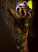 Raccoon Drawings - Forest Baby Raccoon by Kelly McNeil
