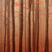 Beech Prints - Forest Barcode Print by Evgeni Dinev