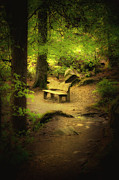 Hill Side Posters - Forest Bench Poster by Svetlana Sewell