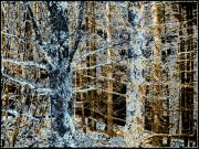 Lichen Photo Posters - Forest Calm Poster by Will Borden