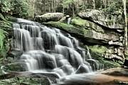 Adam Jewell - Forest Cascade