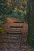 Wooden Stairs Prints - Forest Climb Print by Darlene Bell