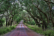 Gravel Road Photos - Forest Corridor by Douglas Barnard