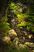 Babbling Metal Prints - Forest creek Metal Print by Elena Elisseeva