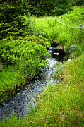 Grasses Prints - Forest creek in Newfoundland Print by Elena Elisseeva