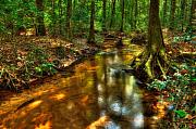 Beautiful Creek Prints - Forest Creek Print by Rich Leighton
