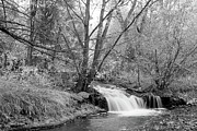 Colorado Prints Prints - Forest Creek Waterfall in Black and White Print by James Bo Insogna