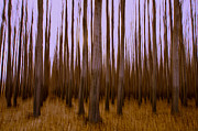 Poplar Forest Photo Metal Prints - Forest Escape Metal Print by Dan Mihai
