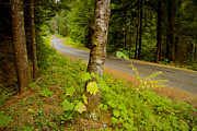 Mountain Road Posters - Forest Escape Poster by Idaho Scenic Images Linda Lantzy
