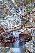 Molly Heng Metal Prints - Forest Falls Metal Print by Molly Heng