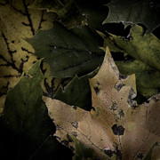 Forest Floor Prints - Forest Floor - Leaf 1 Print by Pete Hellmann
