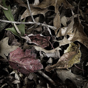 Forest Floor Art - Forest Floor - Leaf 10 by Pete Hellmann