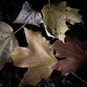 Forest Floor Prints - Forest Floor - Leaf 2 Print by Pete Hellmann