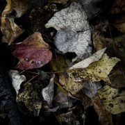 Forest Floor Prints - Forest Floor - Leaf 6 Print by Pete Hellmann