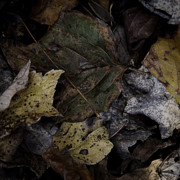 Forest Floor Prints - Forest Floor - Leaf 7 Print by Pete Hellmann