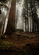 Forest Floor Prints - Forest Floor and Fog Print by Susan Gary