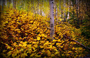 Santa Fe National Forest Photos - Forest Floor Autumn Leaves by Aaron Burrows