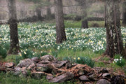 Field Of Flowers Prints - Forest Flower Print by Bill  Wakeley