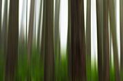 Matt Dobson - Forest Fog
