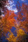 Autumn Foliage Photos - Forest Foliage by John Burk