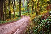 Autumn Leaf Photos - Forest Footpath by Carlos Caetano