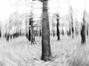 Rural Landscapes Mixed Media Metal Prints - Forest For The Trees - Black and White Nature Photograph Metal Print by Artecco Fine Art Photography - Photograph by Nadja Drieling