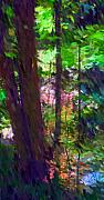 Digital Photography - Forest for the trees by David Lane