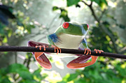 Ilendra Vyas Framed Prints - Forest Frog Framed Print by Ilendra Vyas