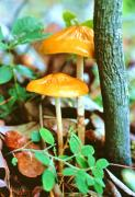 Fungi Photos - Forest Funji by John Foote