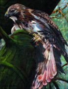 Red-tailed Hawk Paintings - Forest Hunter Red Tailed Hawk by Kelly McNeil