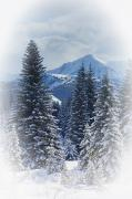 Evergreen Covered In Snow Framed Prints - Forest In The Winter Framed Print by Carson Ganci
