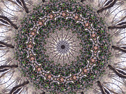 Mandalas Digital Art - Forest Mandala 5 by Rhonda Barrett